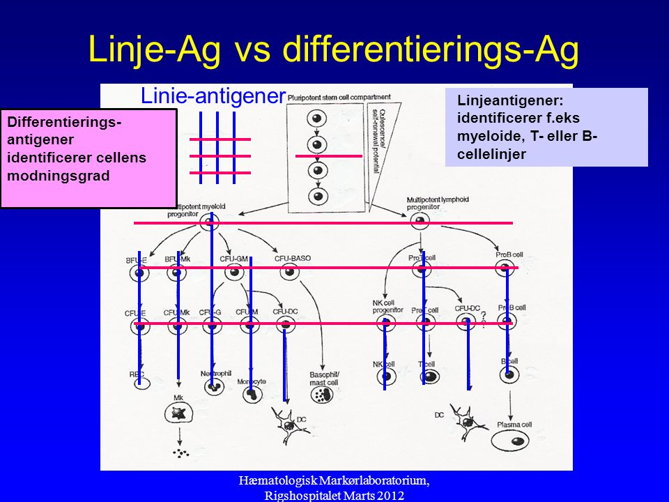 Linje-Ag vs differentierings-Ag