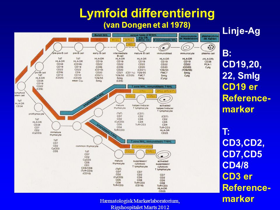 Lymfoid differentiering (van Dongen et al 1978)
