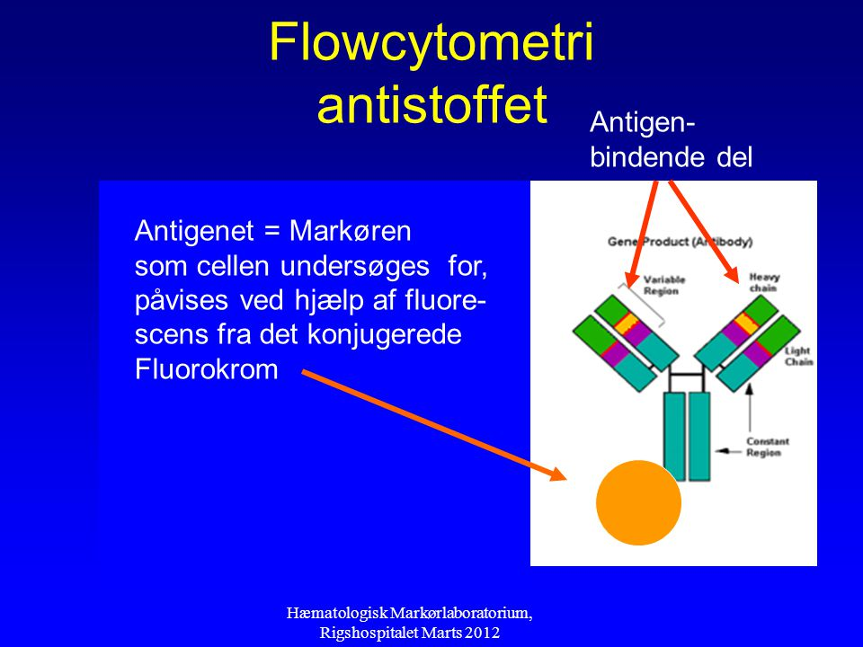 Flowcytometri antistoffet