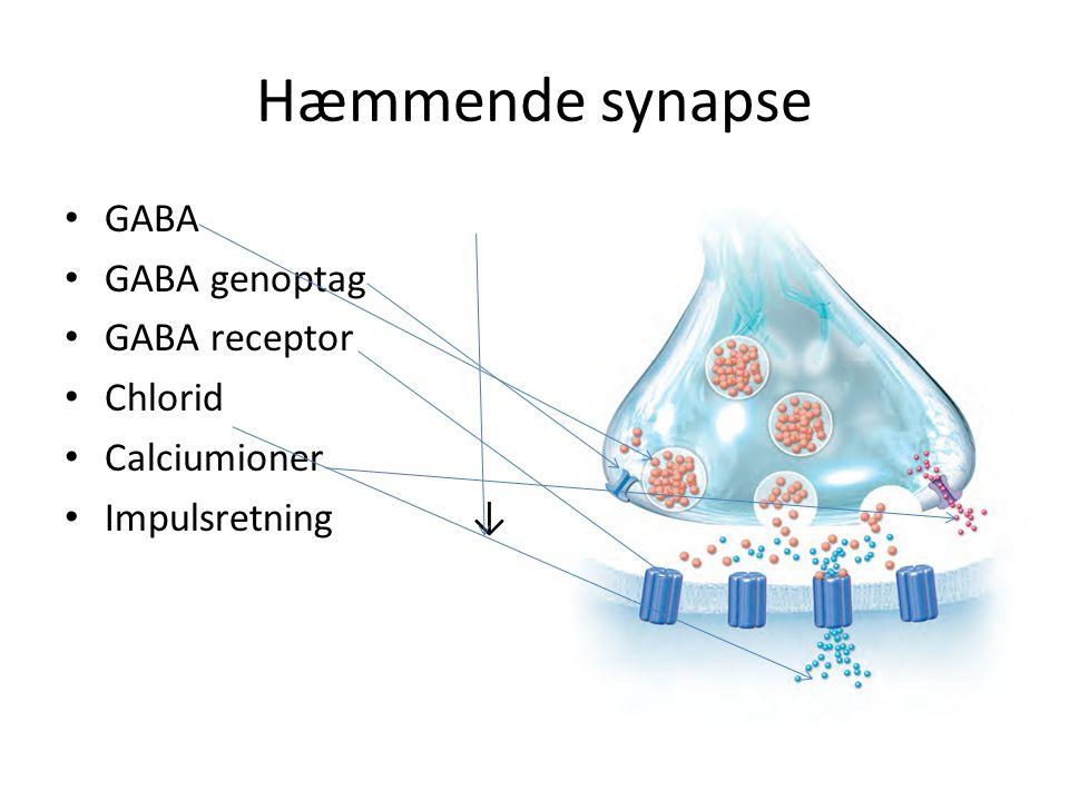 Hæmmende synapse GABA GABA genoptag GABA receptor Chlorid Calciumioner