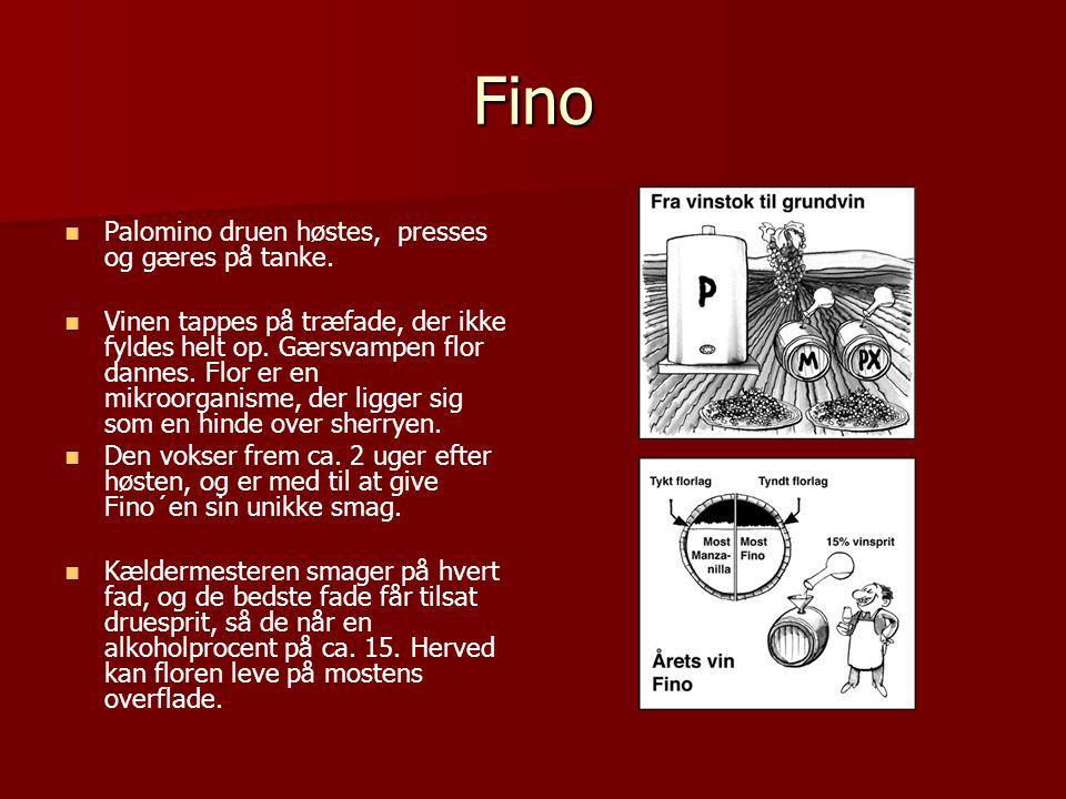 Fino Palomino druen høstes, presses og gæres på tanke.