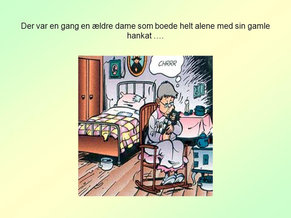 Der var en gang en ældre dame som boede helt alene med sin gamle hankat ….