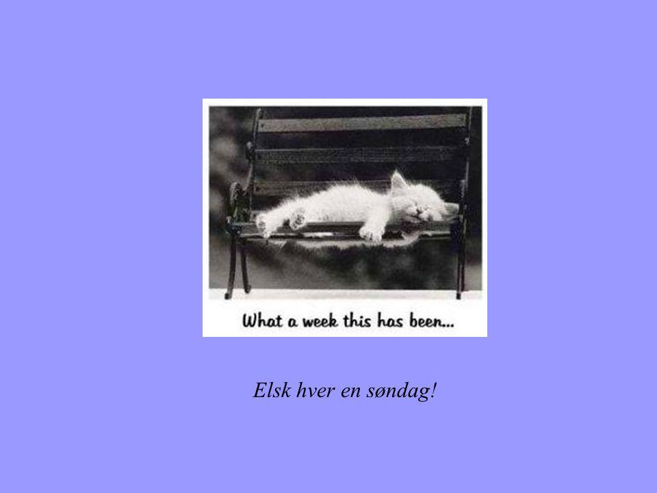 Elsk hver en søndag!