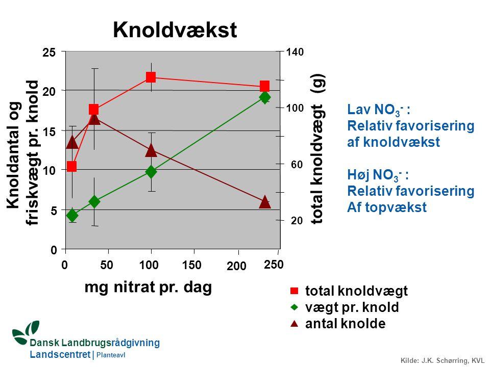 Knoldvækst friskvægt pr. knold total knoldvægt (g) Knoldantal og