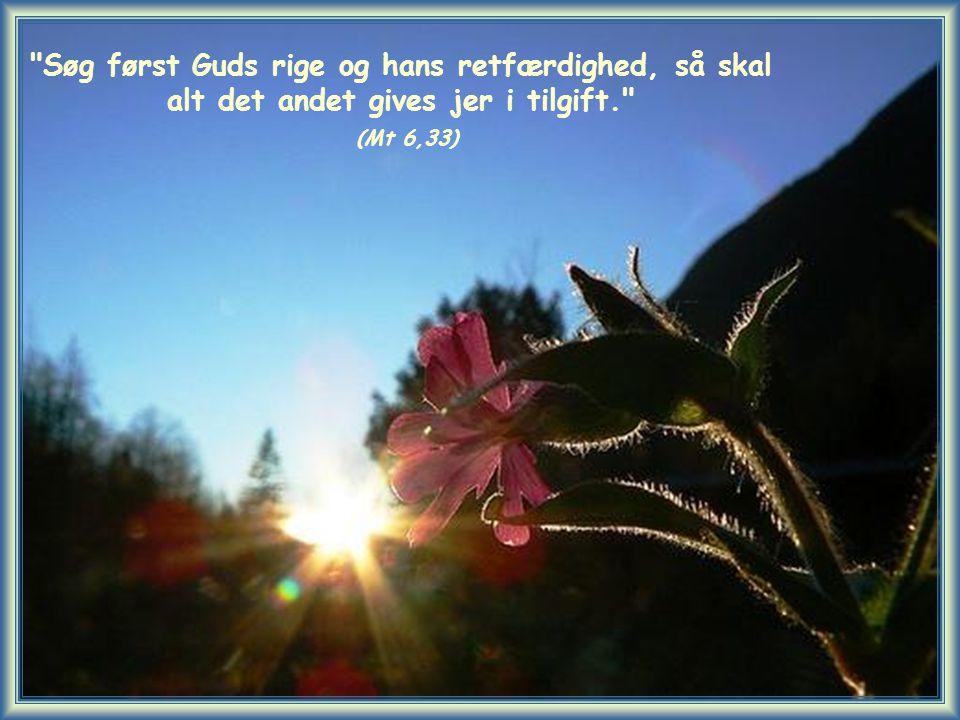Søg først Guds rige og hans retfærdighed, så skal alt det andet gives jer i tilgift. (Mt 6,33)