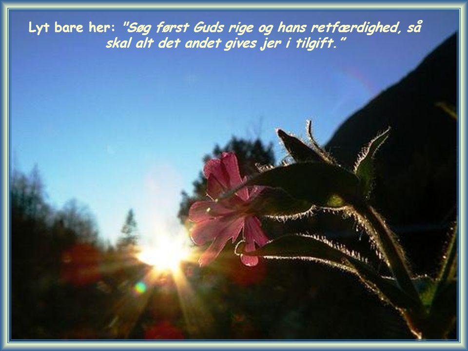 Lyt bare her: Søg først Guds rige og hans retfærdighed, så skal alt det andet gives jer i tilgift.