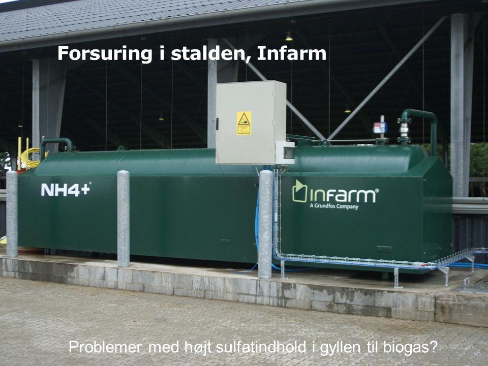 Forsuring i stalden, Infarm