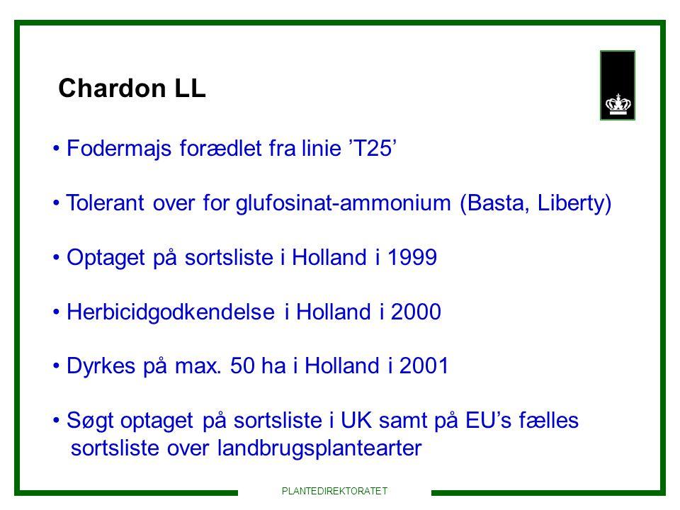 Chardon LL Fodermajs forædlet fra linie 'T25'