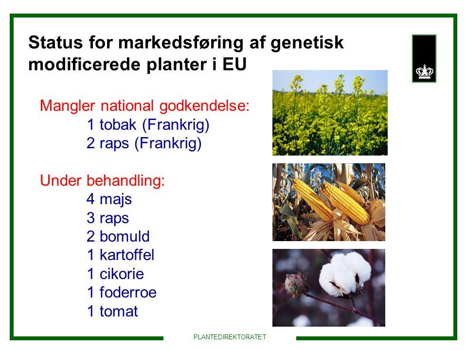 Status for markedsføring af genetisk modificerede planter i EU