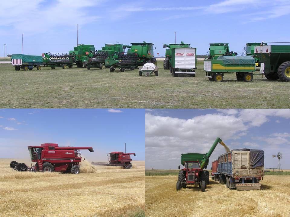 Mange bruger maskinstation til hele eller en del af høsten.