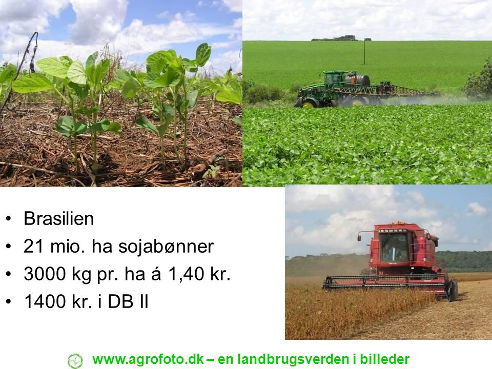 Brasilien 21 mio. ha sojabønner 3000 kg pr. ha á 1,40 kr.