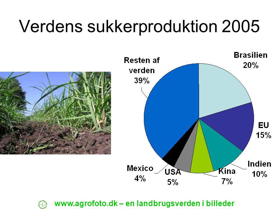 Verdens sukkerproduktion 2005