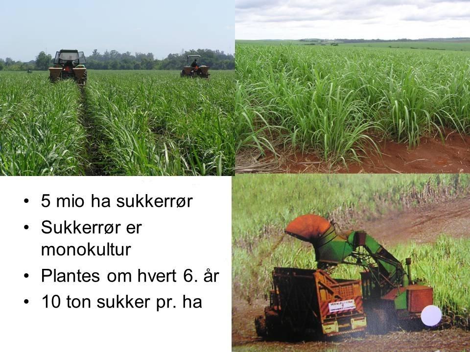 Sukkerrør er monokultur Plantes om hvert 6. år 10 ton sukker pr. ha