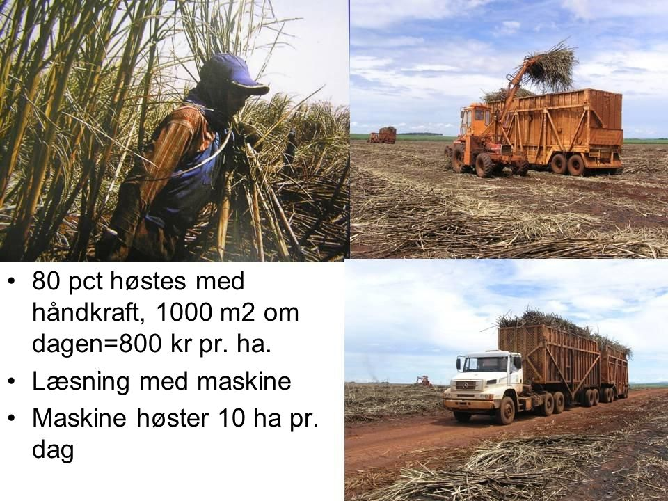 80 pct høstes med håndkraft, 1000 m2 om dagen=800 kr pr. ha.