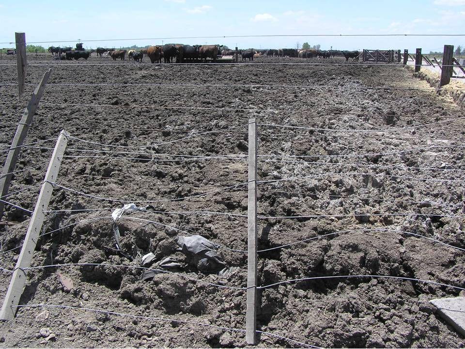 Gødningen fra disse 12.000 dyr blev kørt ud på 80 ha en gang om året.