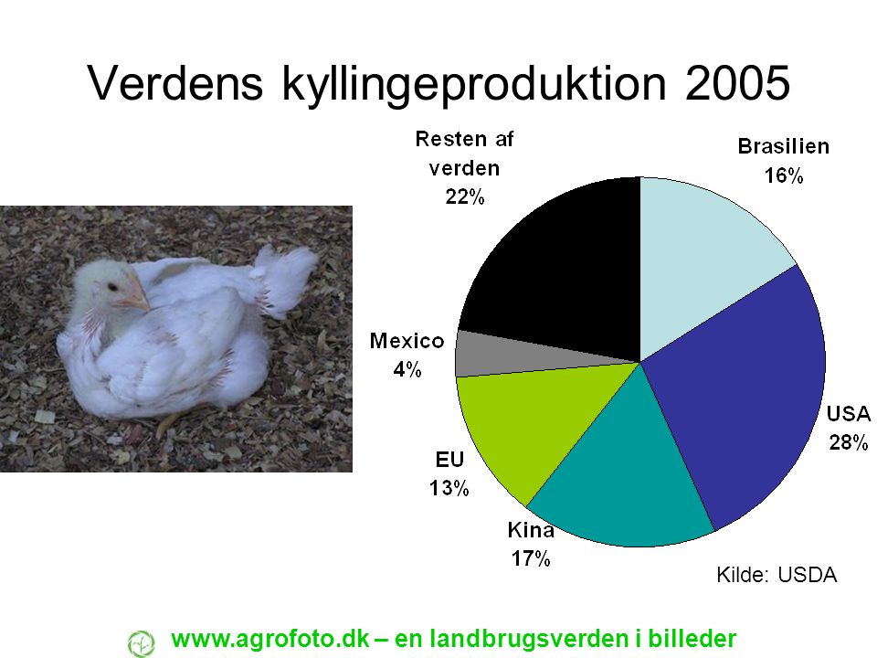Verdens kyllingeproduktion 2005