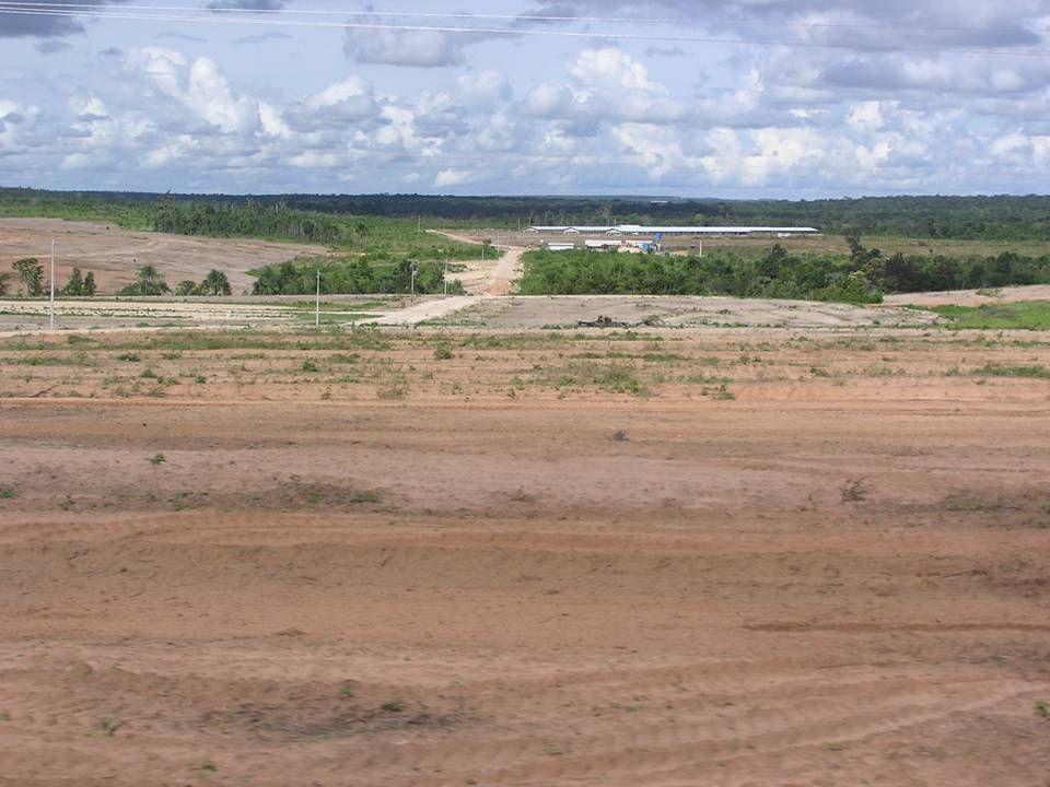 Pedigau er Brasiliens største kyllingeproducent.