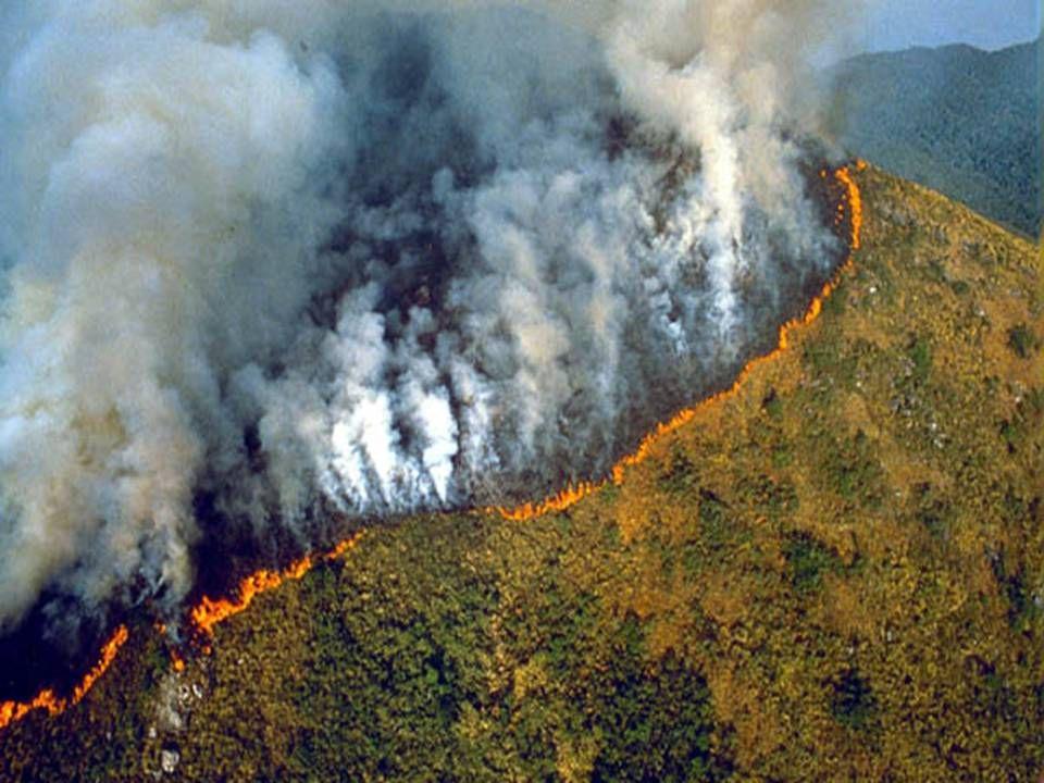 Afbrænding af Amazonas bidrager med 20 pct