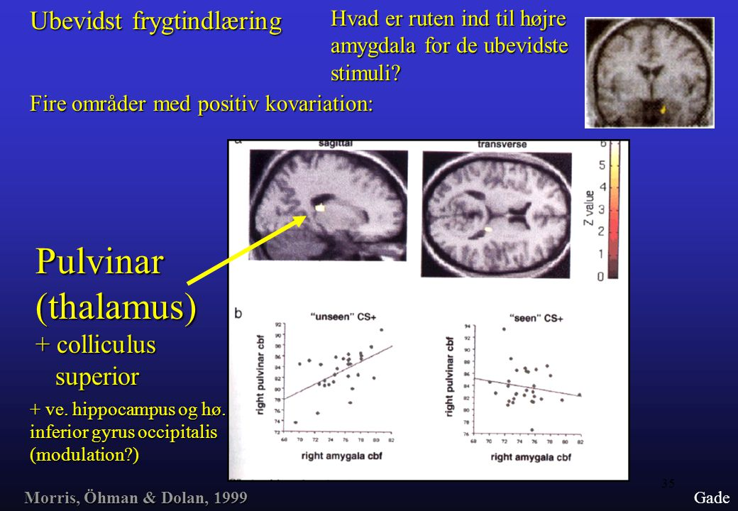 Pulvinar (thalamus) Ubevidst frygtindlæring + colliculus superior