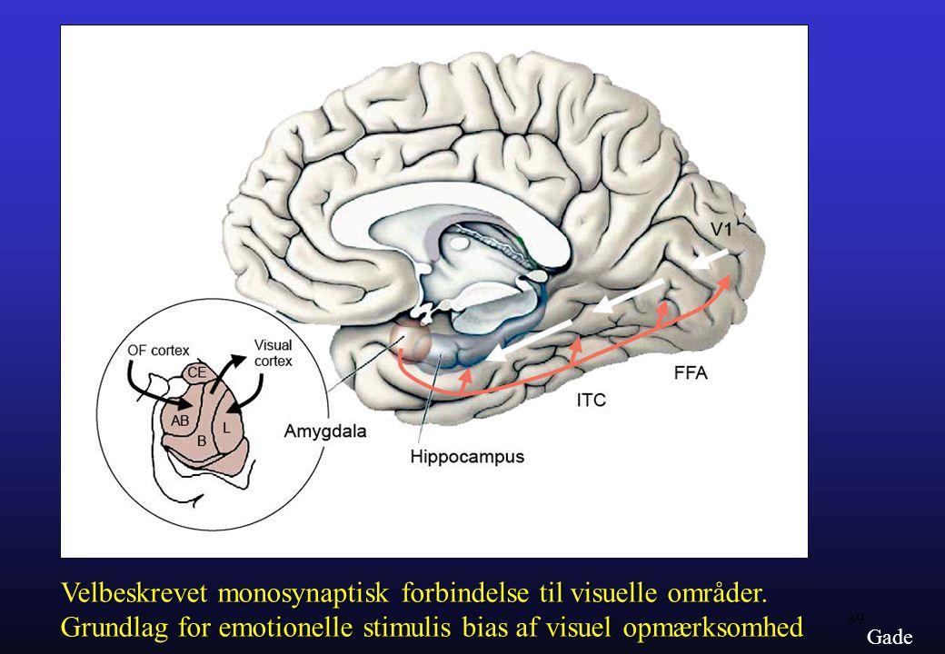 Velbeskrevet monosynaptisk forbindelse til visuelle områder