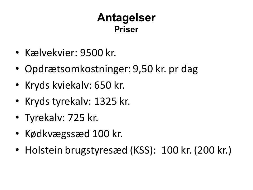 Opdrætsomkostninger: 9,50 kr. pr dag Kryds kviekalv: 650 kr.