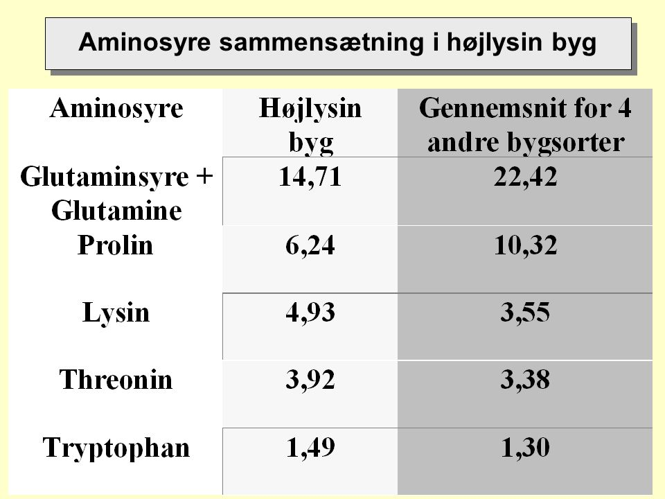 Aminosyre sammensætning i højlysin byg