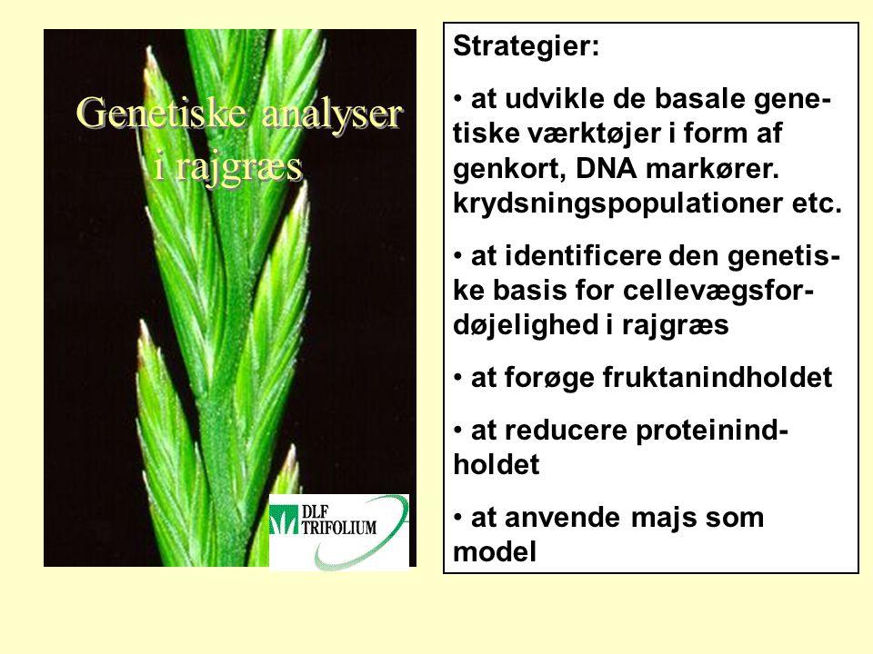 Genetiske analyser i rajgræs Strategier: