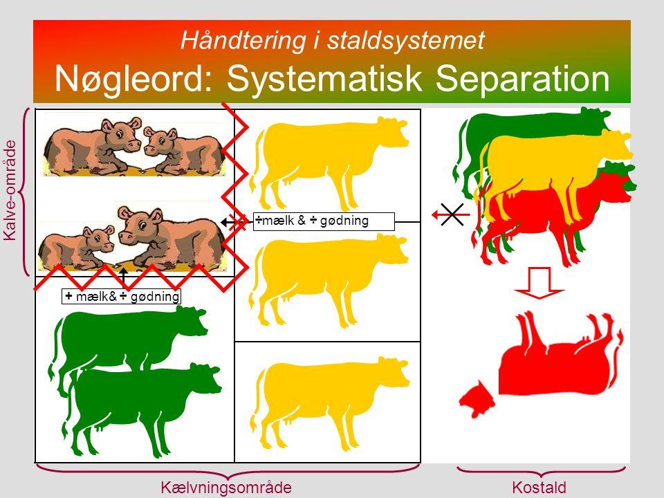 Håndtering i staldsystemet Nøgleord: Systematisk Separation