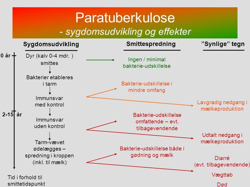 Paratuberkulose - sygdomsudvikling og effekter