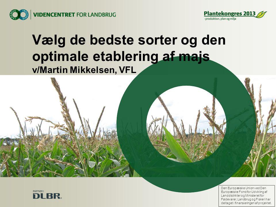 Vælg de bedste sorter og den optimale etablering af majs v/Martin Mikkelsen, VFL