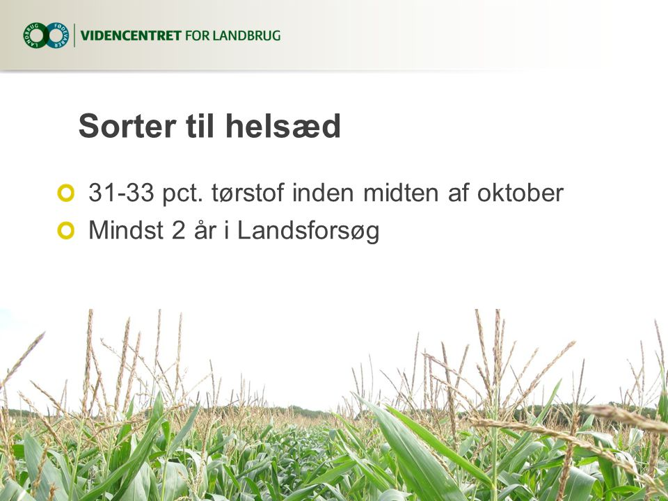 Sorter til helsæd 31-33 pct. tørstof inden midten af oktober
