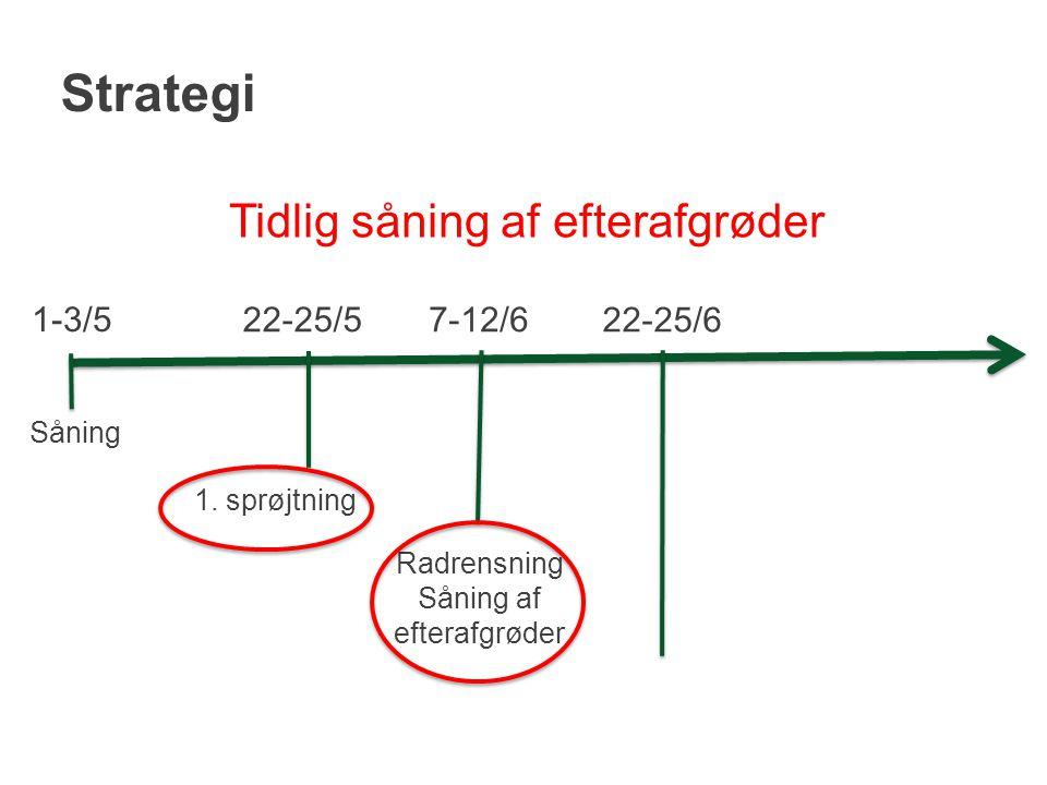 Strategi Tidlig såning af efterafgrøder 1-3/5 22-25/5 7-12/6 22-25/6
