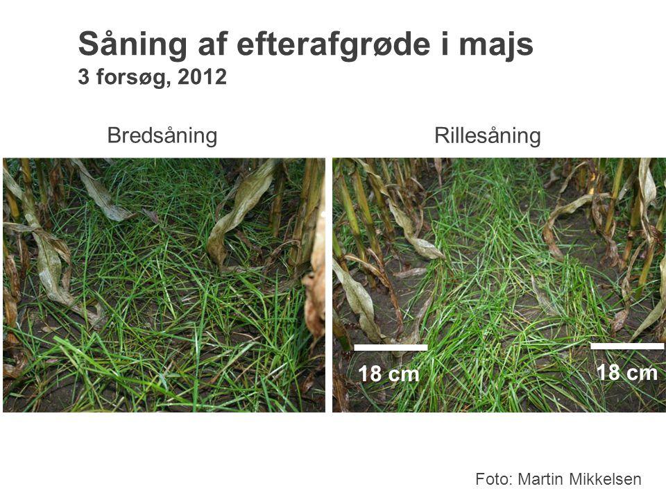 Såning af efterafgrøde i majs 3 forsøg, 2012