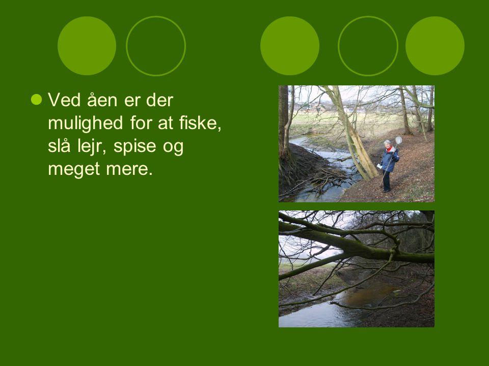 Ved åen er der mulighed for at fiske, slå lejr, spise og meget mere.