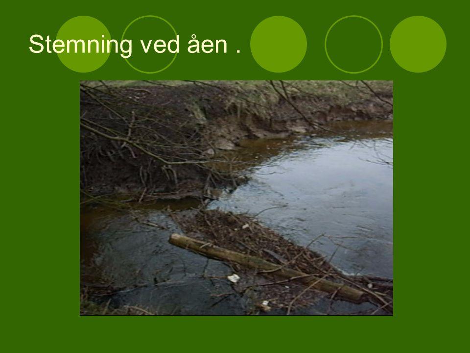 Stemning ved åen .