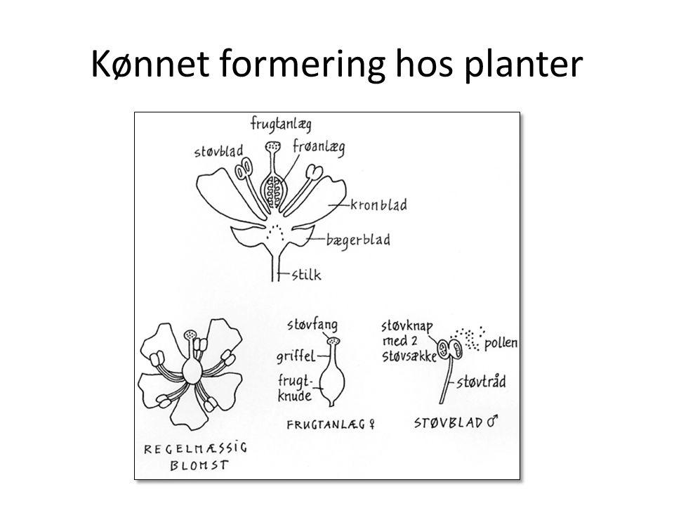 Kønnet formering hos planter