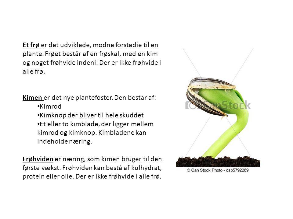 Et frø er det udviklede, modne forstadie til en plante