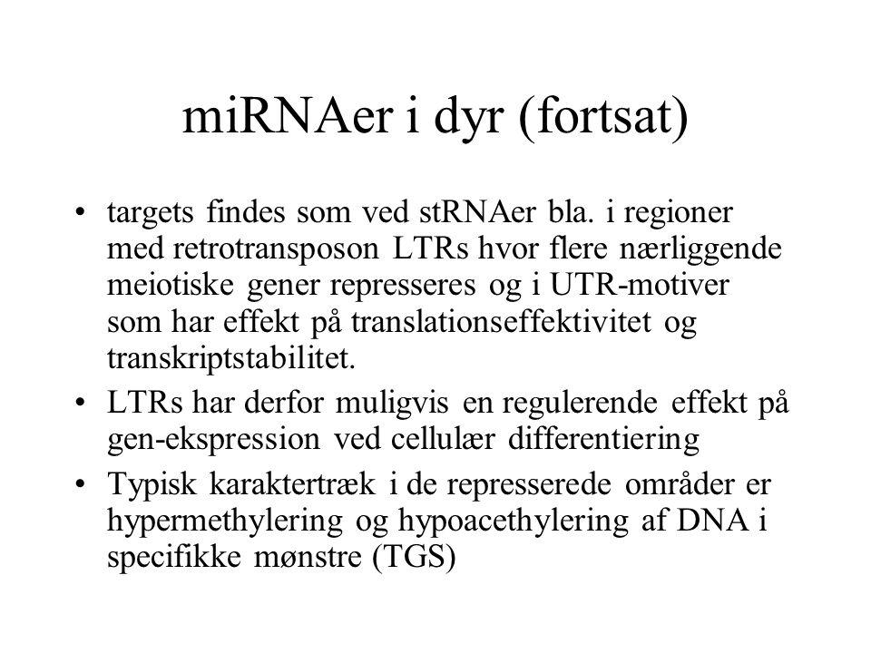 miRNAer i dyr (fortsat)