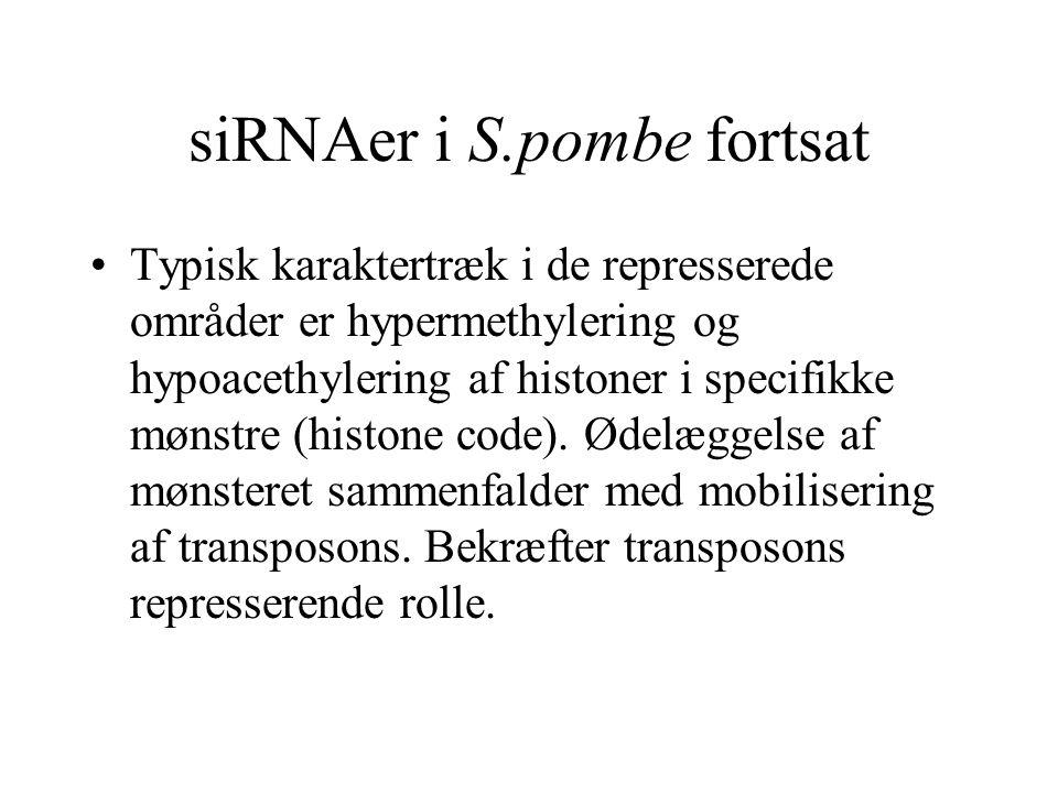 siRNAer i S.pombe fortsat