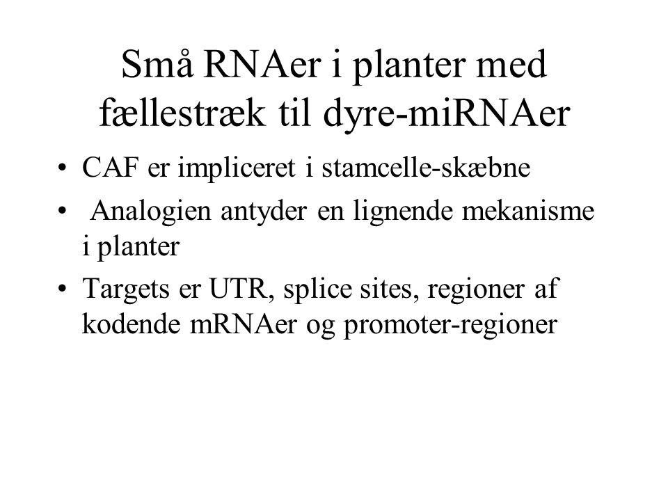 Små RNAer i planter med fællestræk til dyre-miRNAer