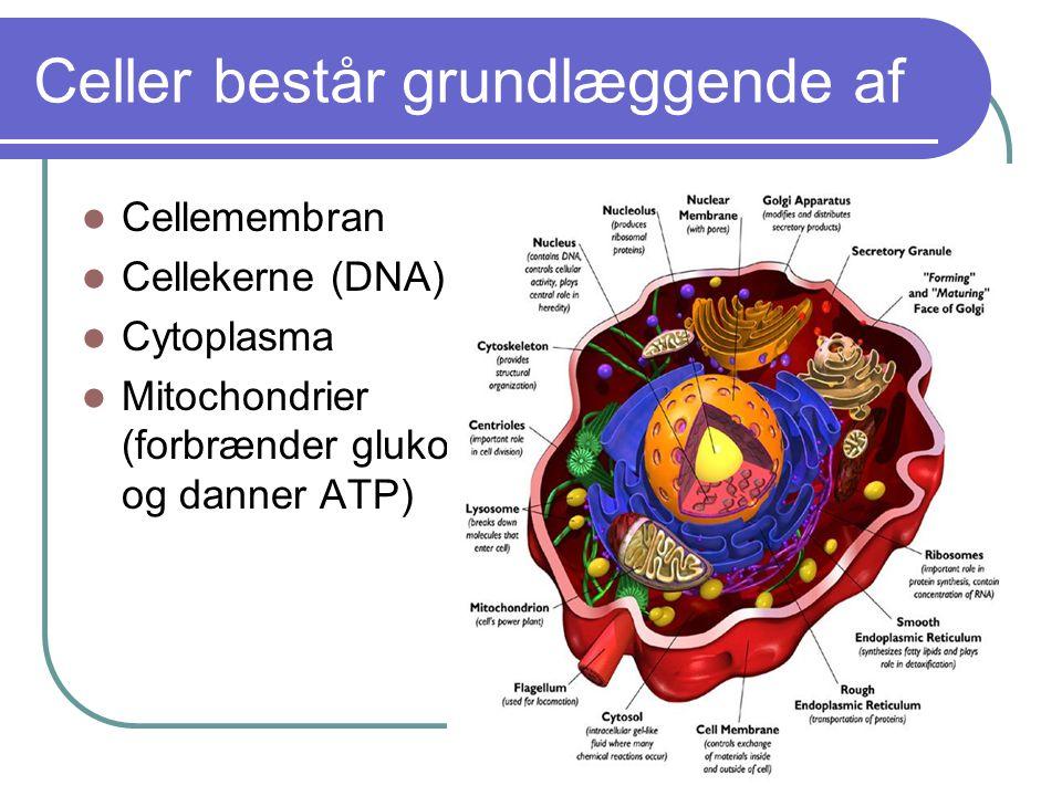 Celler består grundlæggende af
