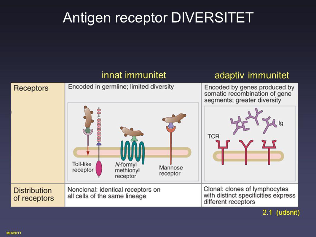 Antigen receptor DIVERSITET