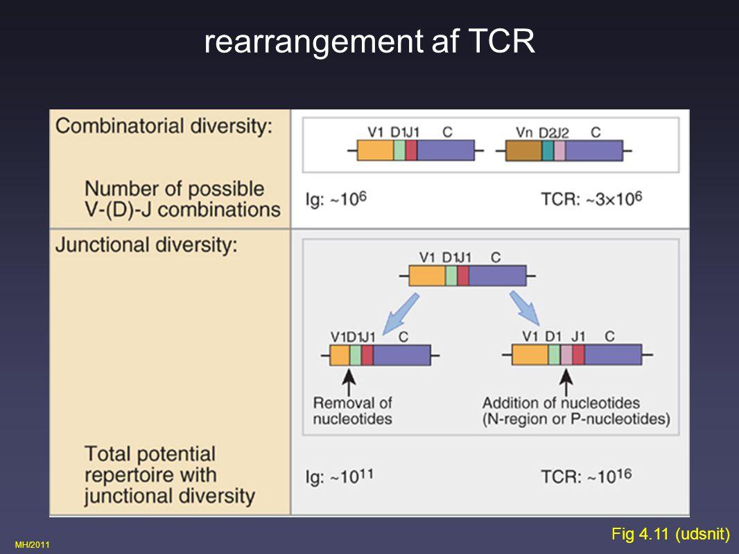 rearrangement af TCR Fig 4.11 (udsnit)