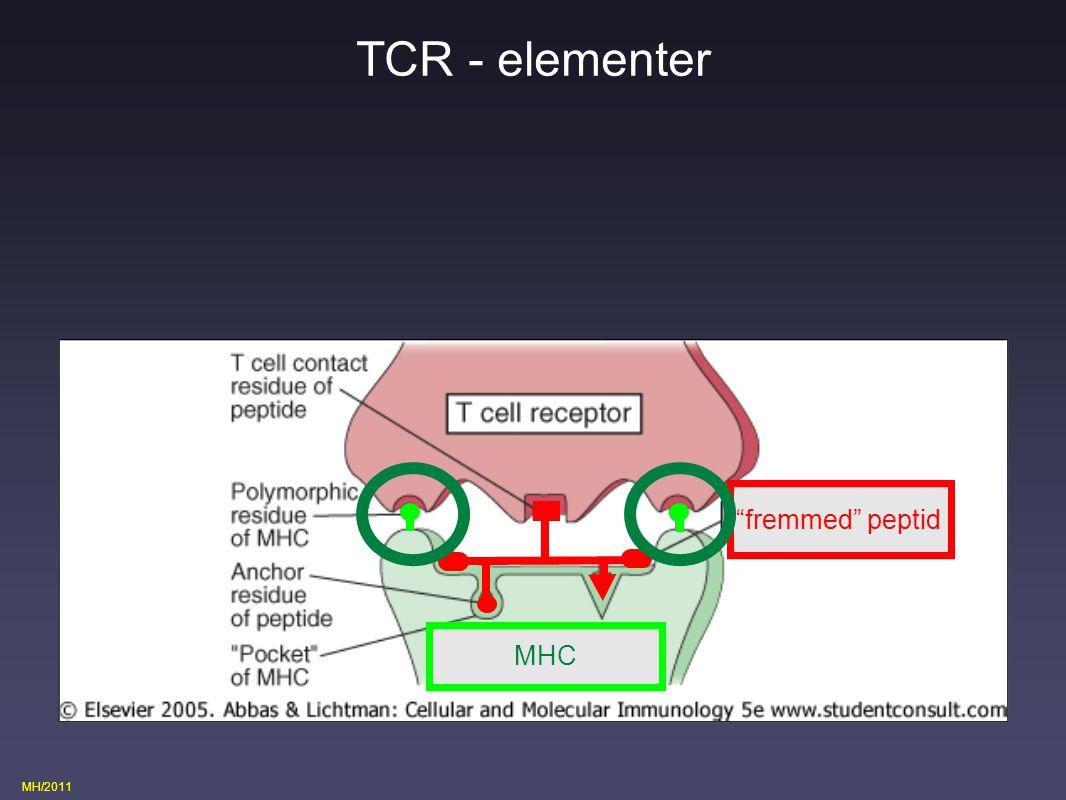 TCR - elementer fremmed peptid MHC eget MHC Fig 3.1