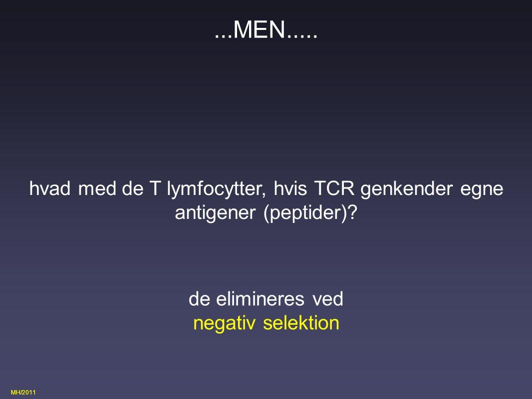 ...MEN..... hvad med de T lymfocytter, hvis TCR genkender egne antigener (peptider)