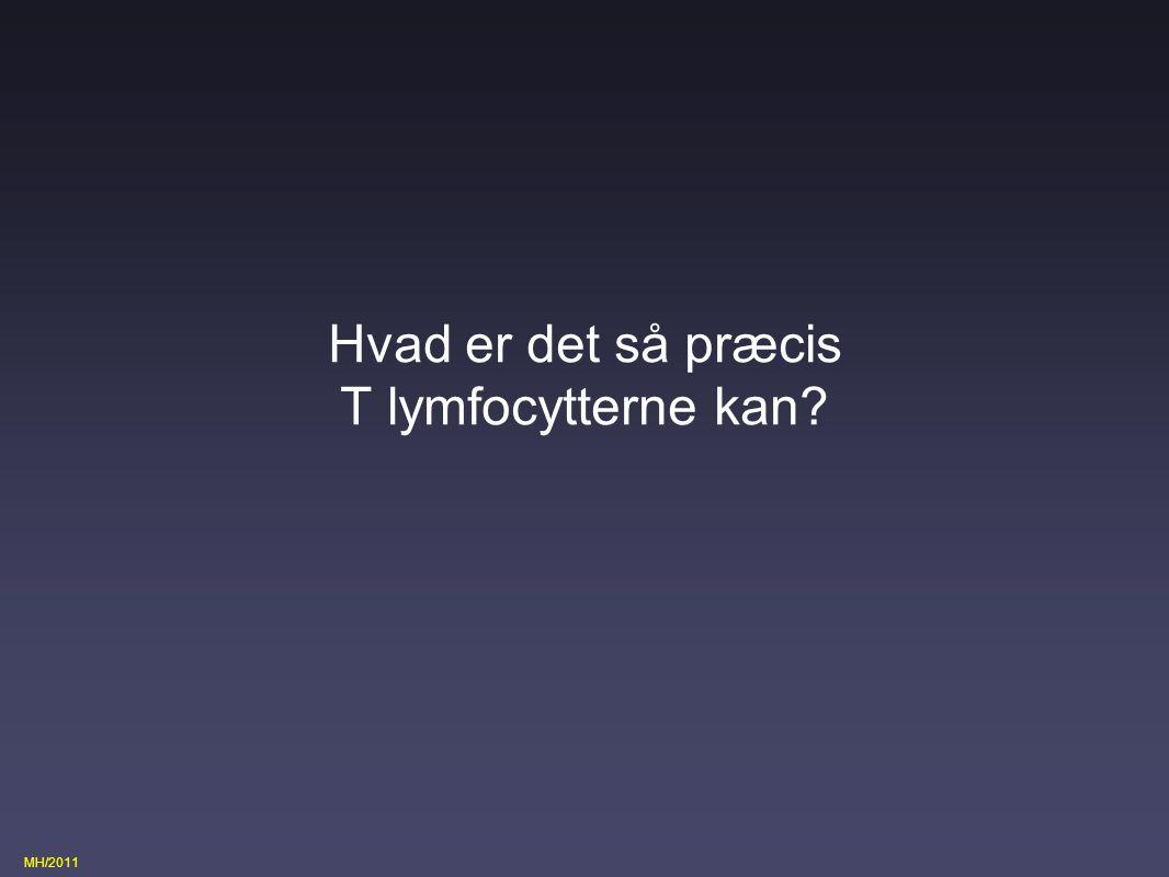 Hvad er det så præcis T lymfocytterne kan