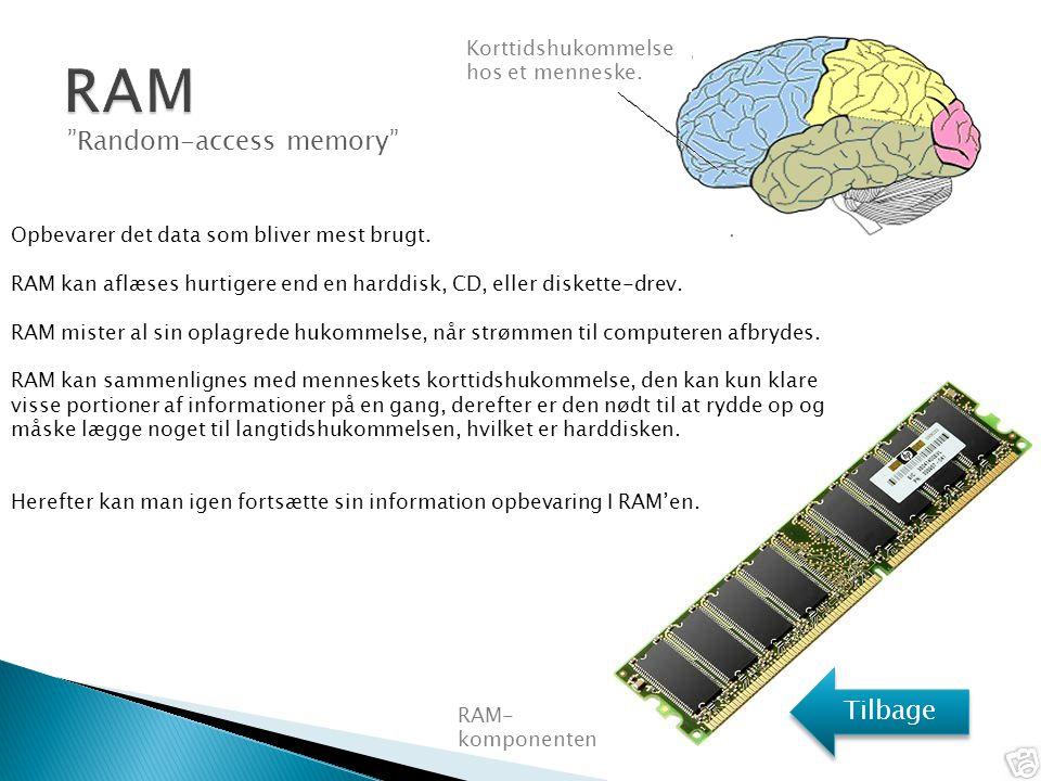 RAM Random-access memory Tilbage Korttidshukommelse hos et menneske.