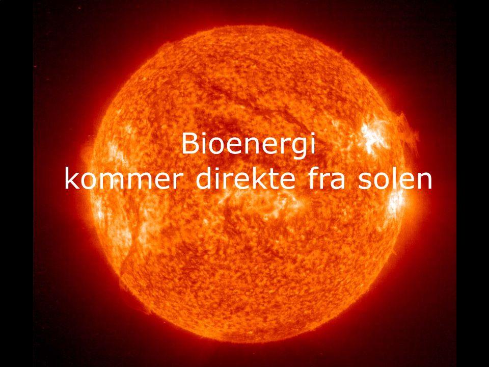 Bioenergi kommer direkte fra solen