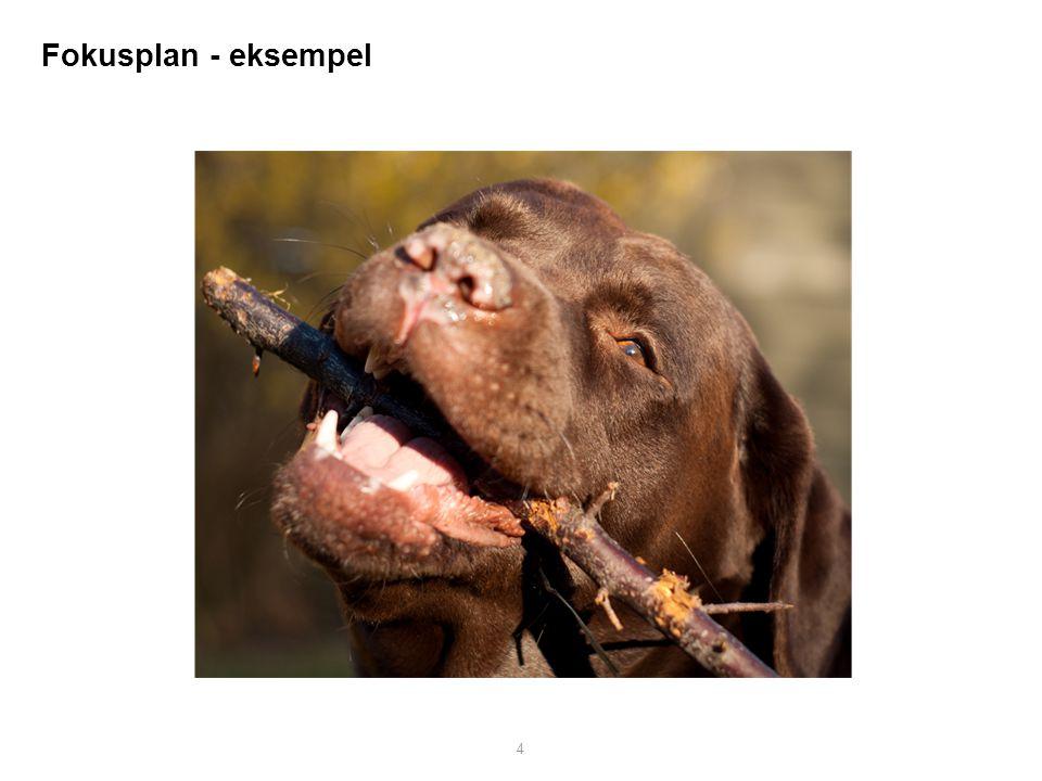 Fokusplan - eksempel
