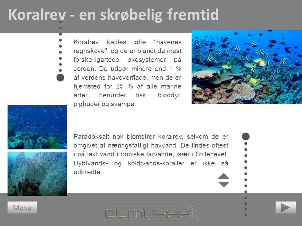 Koralrev - en skrøbelig fremtid